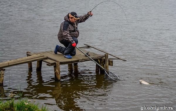 Рыбалка-на-форель-Где-когда-и-на-что-ловить-10