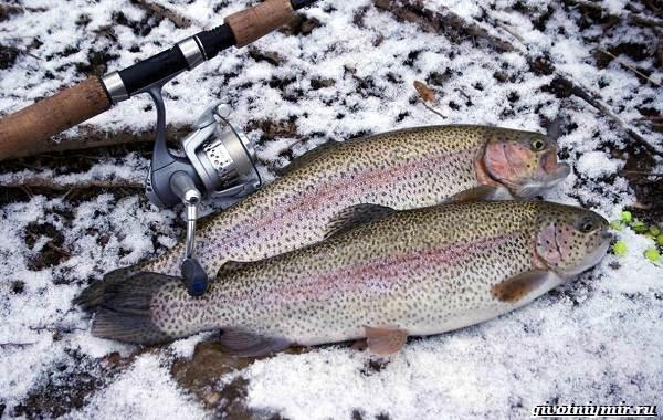 Рыбалка-на-форель-Где-когда-и-на-что-ловить-3