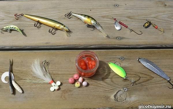 Рыбалка-на-форель-Где-когда-и-на-что-ловить-5