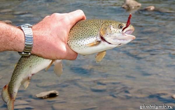 Рыбалка-на-форель-Где-когда-и-на-что-ловить-7