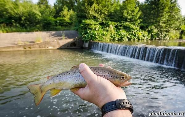 Рыбалка-на-форель-Где-когда-и-на-что-ловить-8