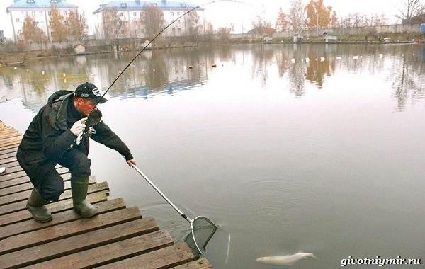 Рыбалка-на-форель-Где-когда-и-на-что-ловить-9