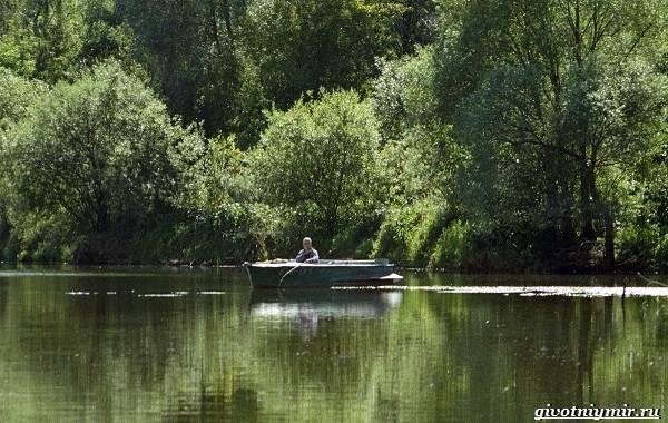 Рыбалка-на-Волге-её-особенности-плюсы-и-минусы-6