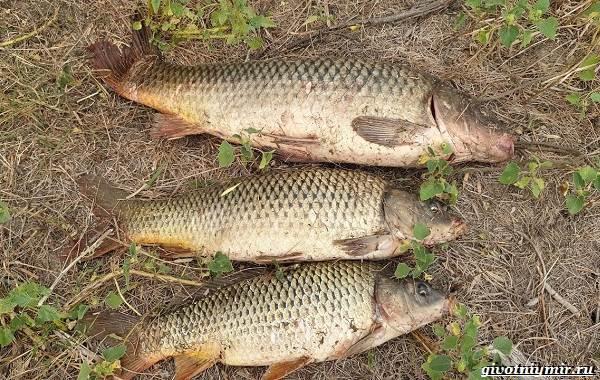 Рыбалка-на-Волге-её-особенности-плюсы-и-минусы-9