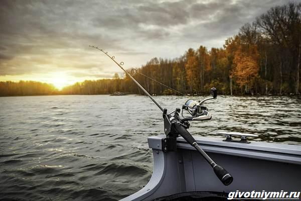 Рыбалка-с-лодки-её-особенности-плюсы-и-минусы-1