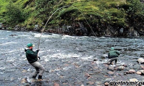 Рыбалка-в-Республике-Коми-и-её-особенности-5