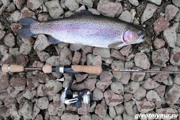 Рыбалка-в-Республике-Коми-и-её-особенности-6