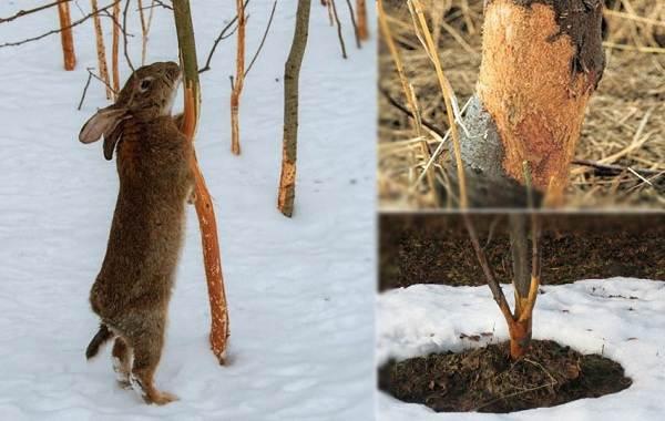 Следы-животных-в-лесу-и-их-особенности-30
