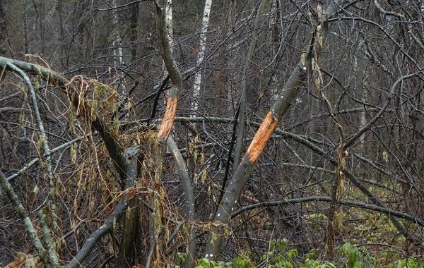 Следы-животных-в-лесу-и-их-особенности-31