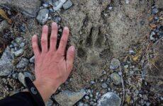 Следы животных в лесу и их особенности
