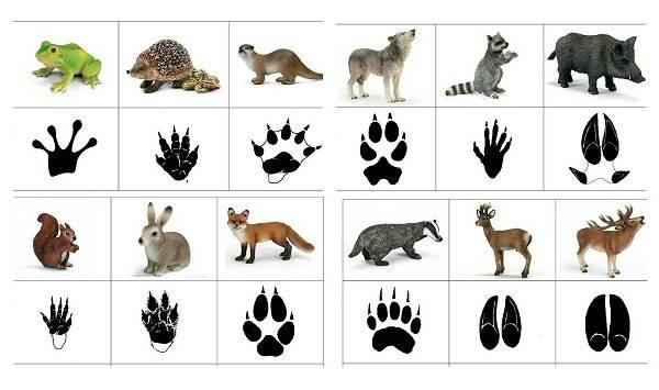 Следы-животных-в-лесу-и-их-особенности