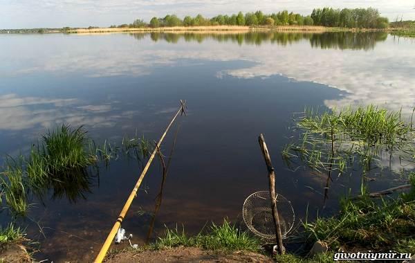 15-лучших-рыболовных-мест-Калининградской-области-12