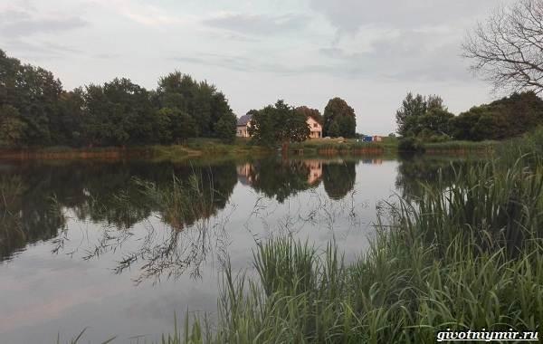 15-лучших-рыболовных-мест-Калининградской-области-18