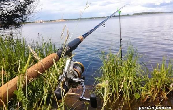 15-лучших-рыболовных-мест-Калининградской-области-19