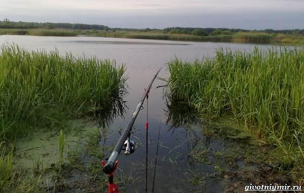 15-лучших-рыболовных-мест-Калининградской-области-20