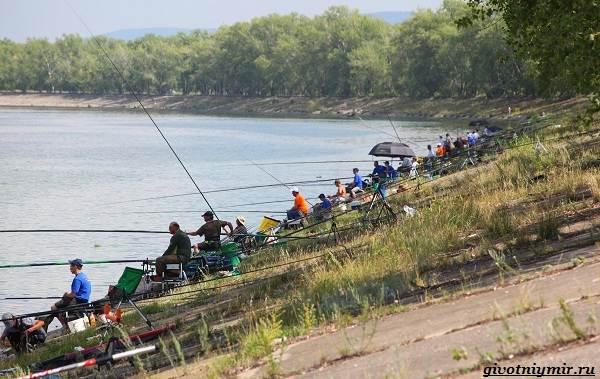 15-лучших-рыболовных-мест-Самарской-области-Бесплатные-и-платные-1