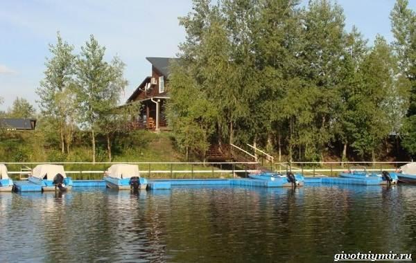 15-лучших-рыболовных-мест-Самарской-области-Бесплатные-и-платные-13