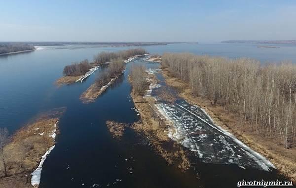 15-лучших-рыболовных-мест-Самарской-области-Бесплатные-и-платные-3