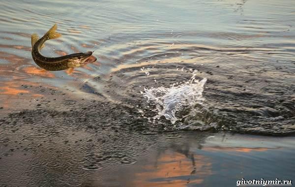 15-лучших-рыболовных-мест-Самарской-области-Бесплатные-и-платные-4