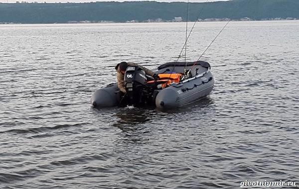 15-лучших-рыболовных-мест-Самарской-области-Бесплатные-и-платные-5