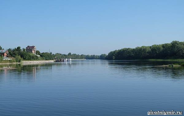 15-лучших-рыболовных-мест-Самарской-области-Бесплатные-и-платные-7
