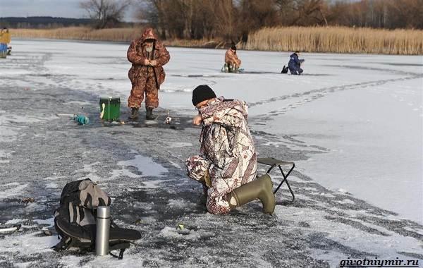 15-лучших-рыболовных-мест-Самарской-области-Бесплатные-и-платные-9
