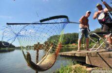 15 лучших рыболовных мест в Тульской области. Бесплатные и платные