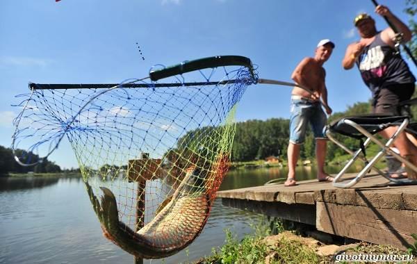15-лучших-рыболовных-мест-в-Тульской-области-Бесплатные-и-платные-1