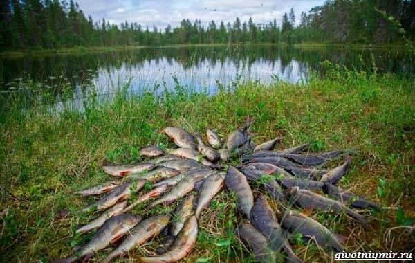 15-лучших-рыболовных-мест-в-Тульской-области-Бесплатные-и-платные-11