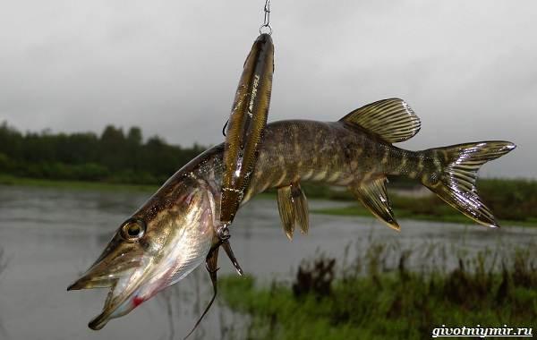 15-лучших-рыболовных-мест-в-Тульской-области-Бесплатные-и-платные-2