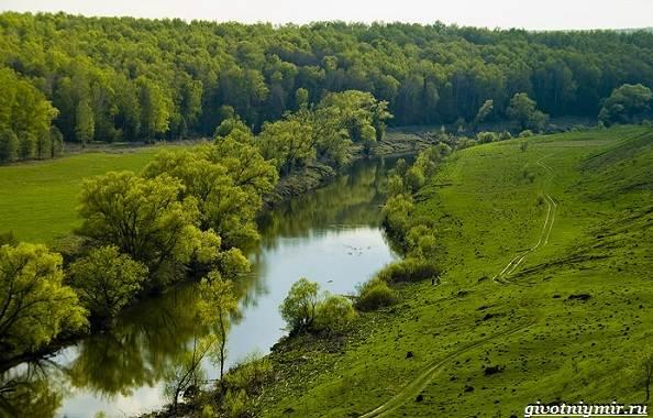 15-лучших-рыболовных-мест-в-Тульской-области-Бесплатные-и-платные-3