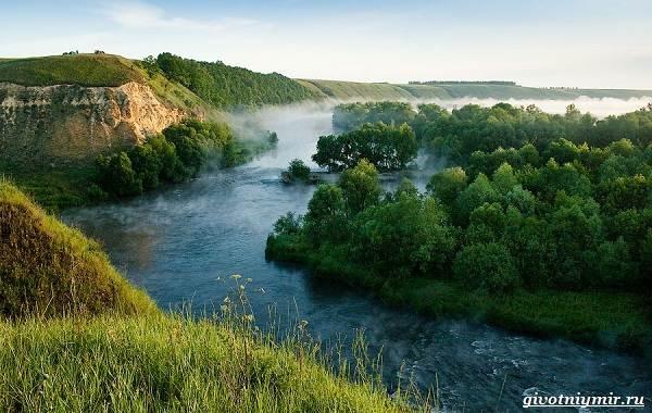 15-лучших-рыболовных-мест-в-Тульской-области-Бесплатные-и-платные-4