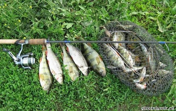 15-лучших-рыболовных-мест-в-Ульяновской-области-Бесплатные-и-платные-1