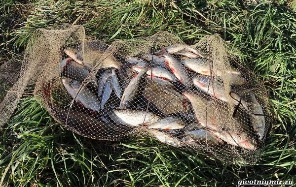 15-лучших-рыболовных-мест-в-Ульяновской-области-Бесплатные-и-платные-12