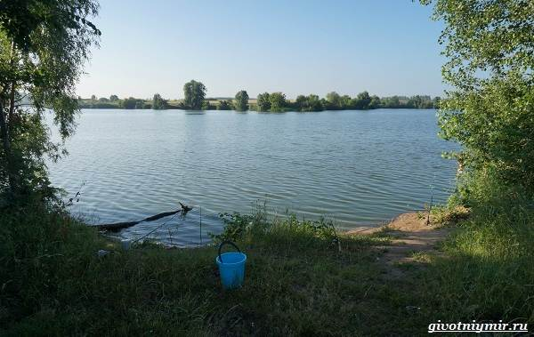 15-лучших-рыболовных-мест-в-Ульяновской-области-Бесплатные-и-платные-14