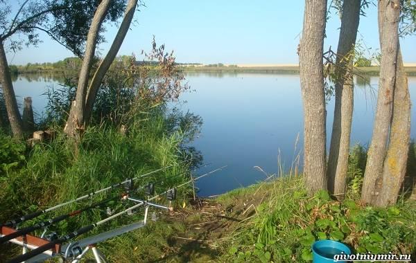 15-лучших-рыболовных-мест-в-Ульяновской-области-Бесплатные-и-платные-2