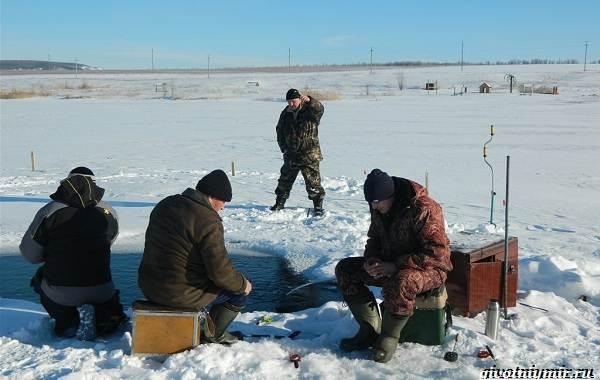 15-лучших-рыболовных-мест-в-Ульяновской-области-Бесплатные-и-платные-3