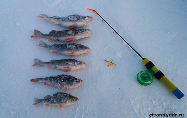 15-лучших-рыболовных-мест-в-Ульяновской-области-Бесплатные-и-платные-4