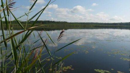 15 лучших рыболовных мест в Ульяновской области. Бесплатные и платные