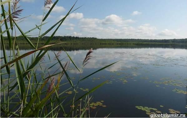 15-лучших-рыболовных-мест-в-Ульяновской-области-Бесплатные-и-платные-9