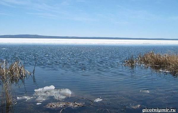 15-лучших-рыболовных-мест-Забайкальского-края-10