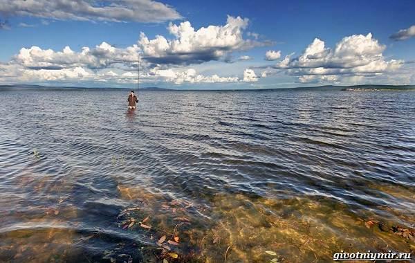 15-лучших-рыболовных-мест-Забайкальского-края-17