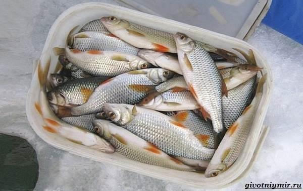 15-лучших-рыболовных-мест-Забайкальского-края-5
