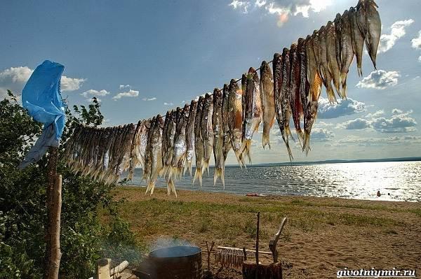 15-лучших-рыболовных-мест-Забайкальского-края-7