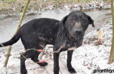Две истории о собаках, которых спасли во время холодов