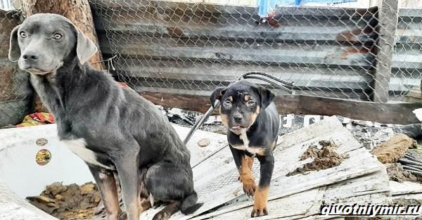 Две-истории-о-собаках-которых-спасли-во-время-холодов-2