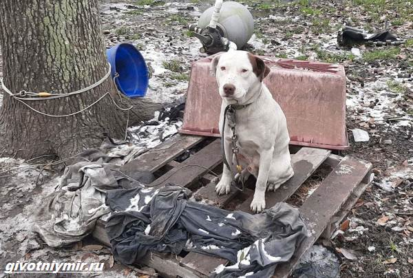 Две-истории-о-собаках-которых-спасли-во-время-холодов-3