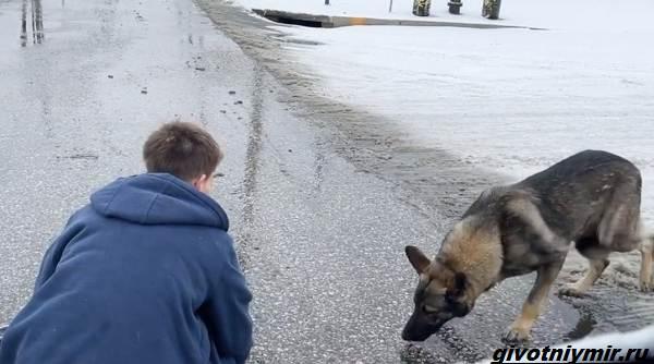 Две-истории-о-собаках-которых-спасли-во-время-холодов-4