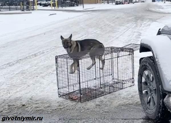 Две-истории-о-собаках-которых-спасли-во-время-холодов-5