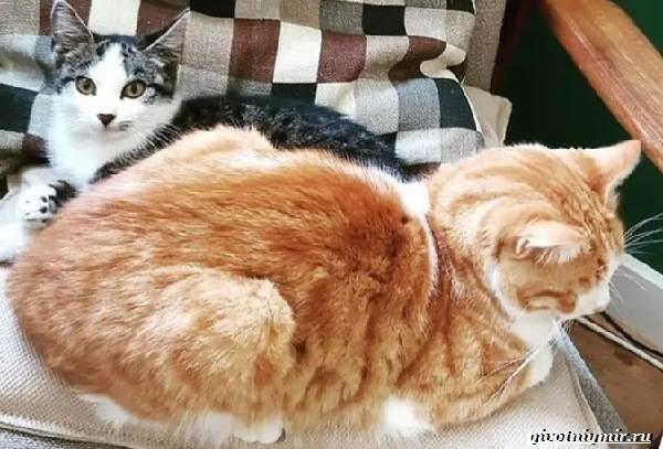 История-о-добром-мурлыке-который-помог-котёнку-обрести-дом-1